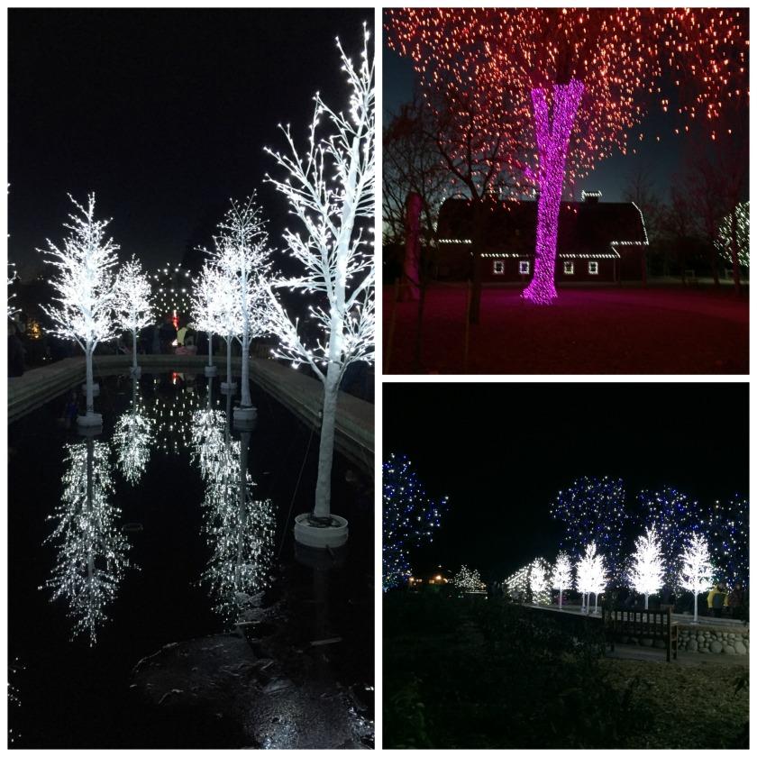 Hudson Gardens December